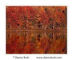 Michigan fall colors