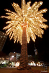 Palm tree marion square christmas lights charleston img 8106