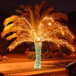 Thumbs palm christmas tree