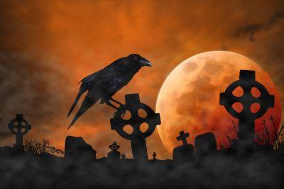 HalloweenSuperstitionCrow